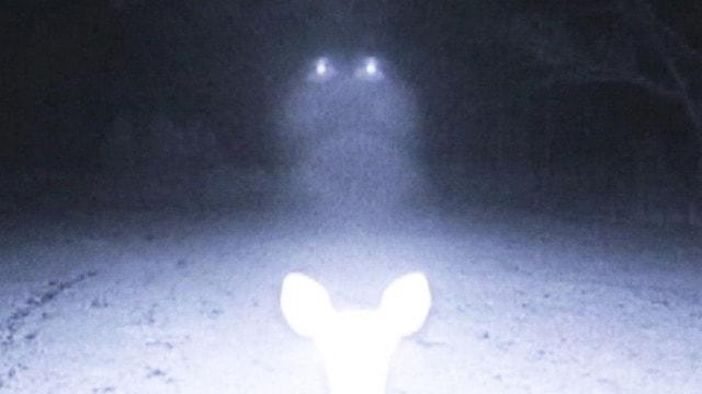 UFOs Descend on Deer in Mississippi Woods